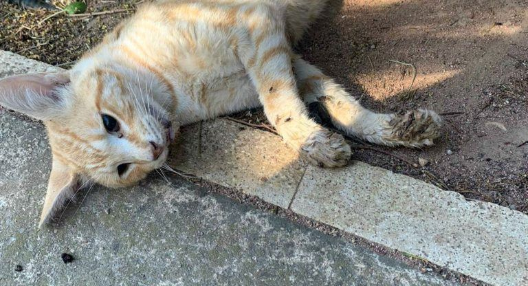 Colonia de gatos muertos en Almansa