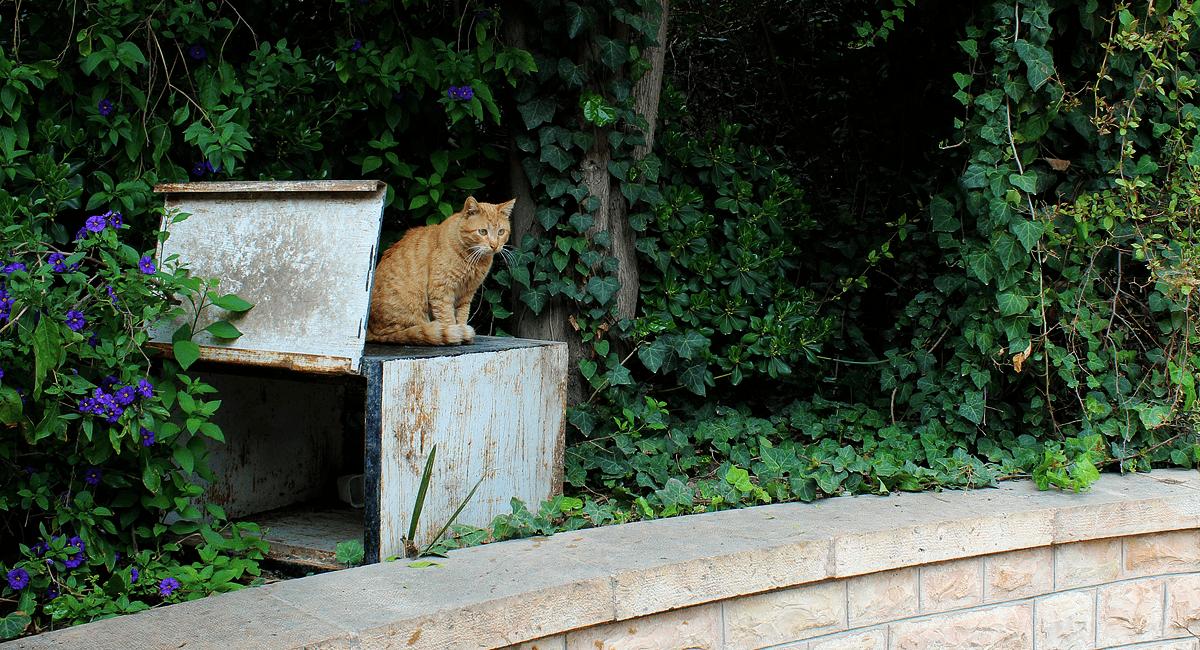 Protección animal Almansa