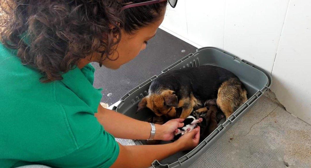 Emperrados, adopta un perro en Albacete teléfono...