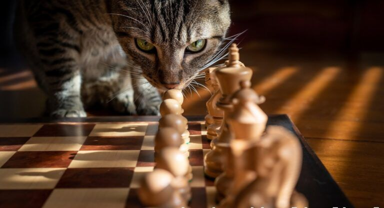 Exhibición club ajedrez almansa
