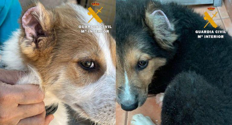 Maltrato animal perros en Almansa